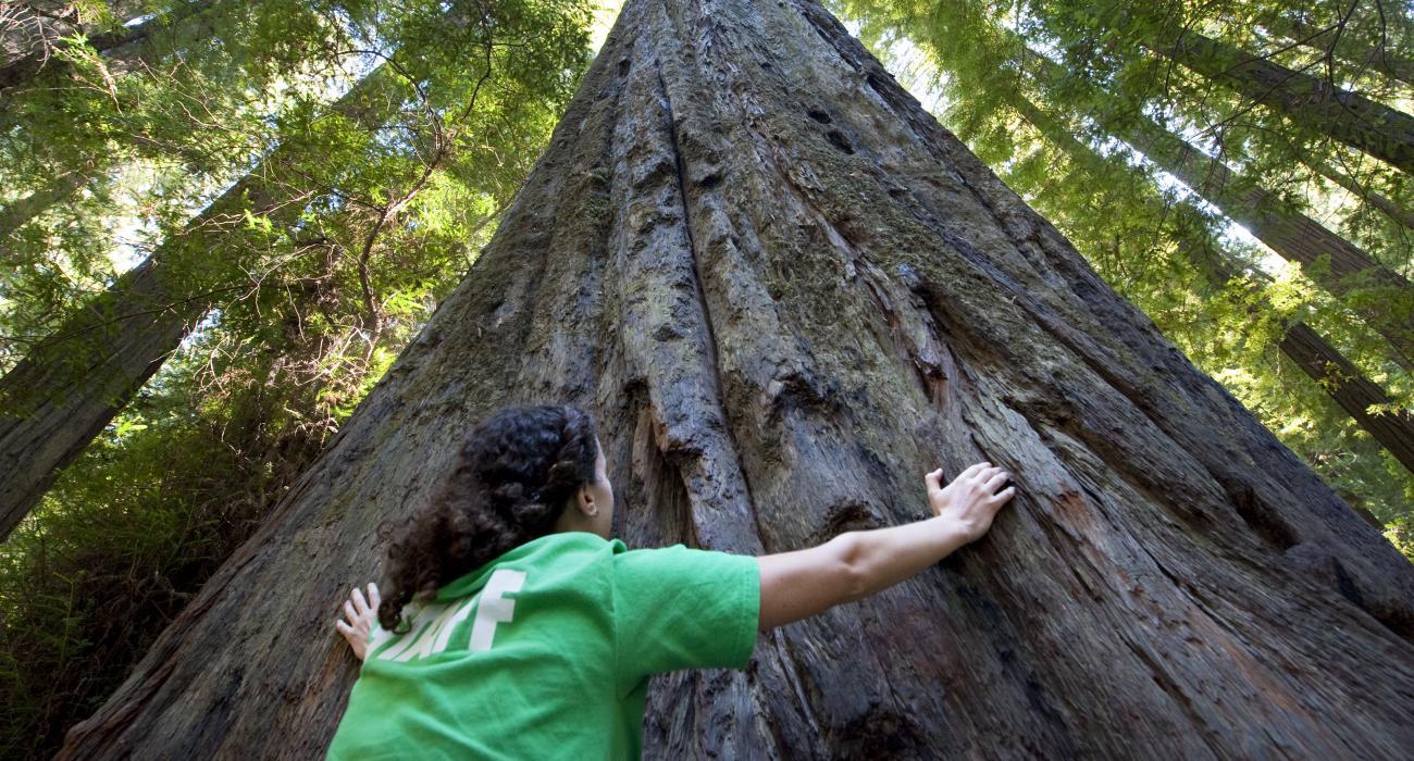 8 - Humboldt Redwoods State Park